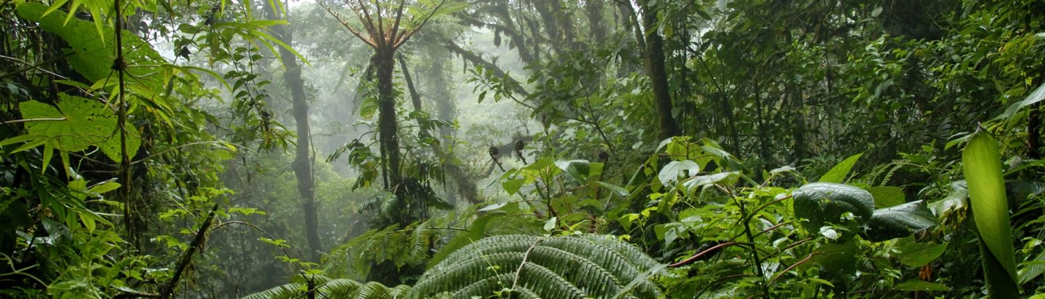features of tropical rainforests and the issues related to it Attitudes toward issues concerning tropical rainforest preservation and  management  the logit model creates a function that depicts the probability that.